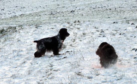 Vive la neige....!